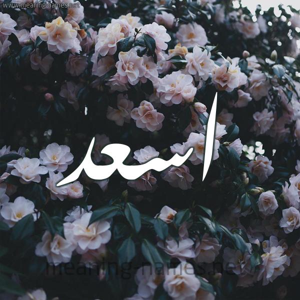 شكل 11 صوره ورود فل وياسمين للإسم بخط رقعة صورة اسم اسعد Asad