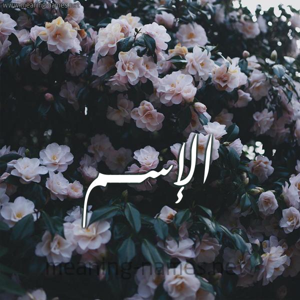 شكل 11 صوره ورود فل وياسمين للإسم بخط رقعة