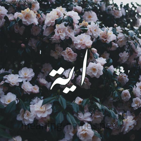 شكل 11 صوره ورود فل وياسمين للإسم بخط رقعة صورة اسم اية Aya