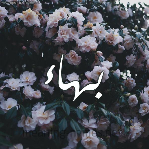 شكل 11 صوره ورود فل وياسمين للإسم بخط رقعة صورة اسم بَهاء Bahaa