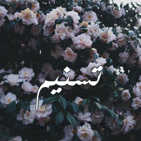 شكل 11 صوره ورود فل وياسمين للإسم بخط رقعة صورة اسم تسنيم Tsnym