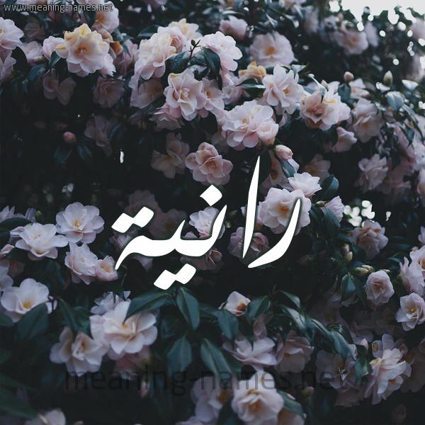 شكل 11 صوره ورود فل وياسمين للإسم بخط رقعة صورة اسم رانية Ranyh