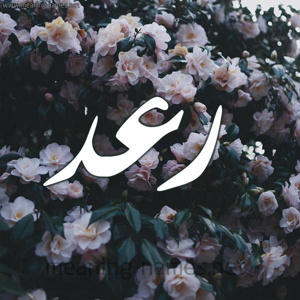 شكل 11 صوره ورود فل وياسمين للإسم بخط رقعة صورة اسم رَعْد RAAD