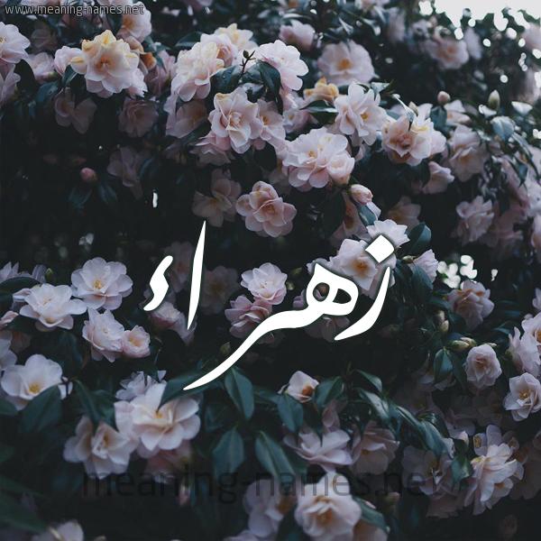 صورة اسم زهراء Zhraa شكل 11 صوره ورود فل وياسمين للإسم بخط رقعة
