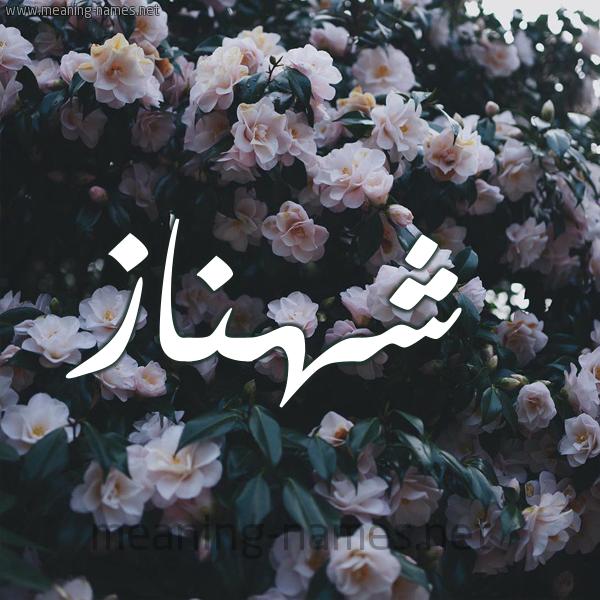 شكل 11 صوره ورود فل وياسمين للإسم بخط رقعة صورة اسم شهناز Shahnaz