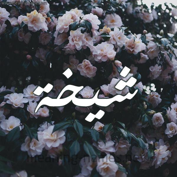 صورة اسم شيخة Shykhh شكل 11 صوره ورود فل وياسمين للإسم بخط رقعة
