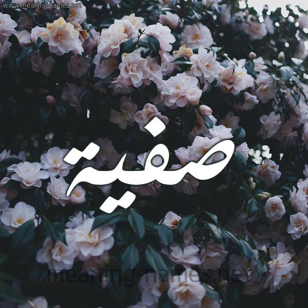 صورة اسم صفية Safia شكل 11 صوره ورود فل وياسمين للإسم بخط رقعة