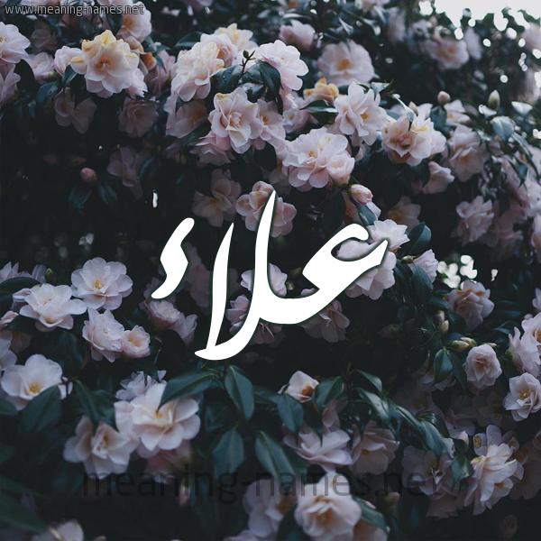صورة اسم علاء Alaa شكل 11 صوره ورود فل وياسمين للإسم بخط رقعة