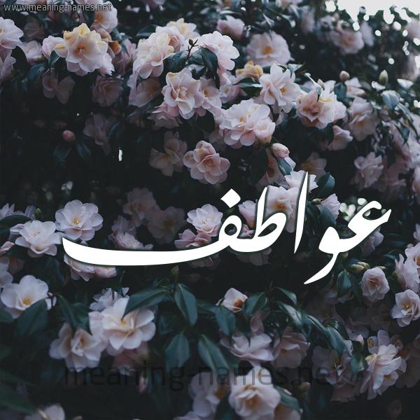 شكل 11 صوره ورود فل وياسمين للإسم بخط رقعة صورة اسم عواطف Awatf
