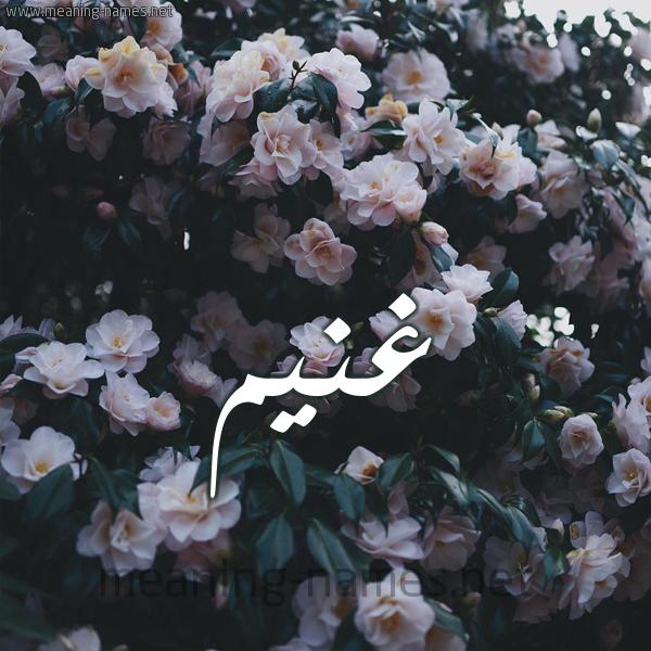 شكل 11 صوره ورود فل وياسمين للإسم بخط رقعة صورة اسم غُنَيم GHONAIM