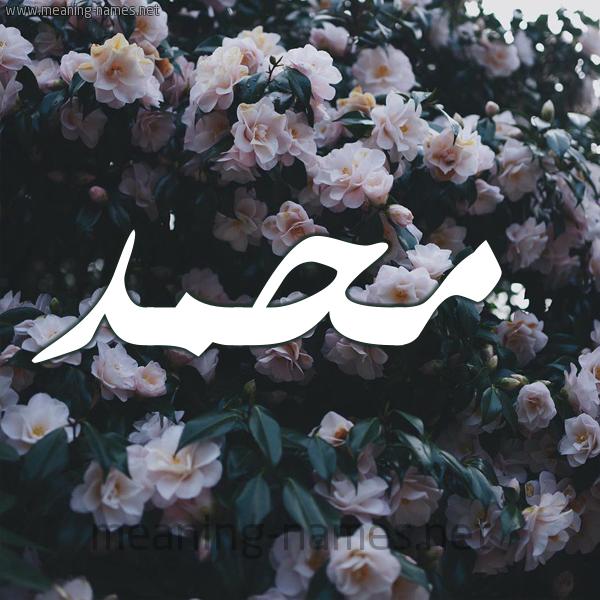 صورة اسم محمد Mohammed شكل 11 صوره ورود فل وياسمين للإسم بخط رقعة