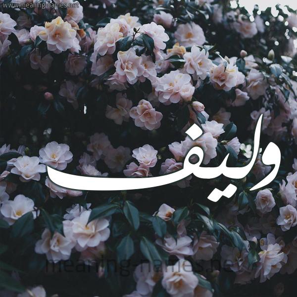شكل 11 صوره ورود فل وياسمين للإسم بخط رقعة صورة اسم وَليف OALIF
