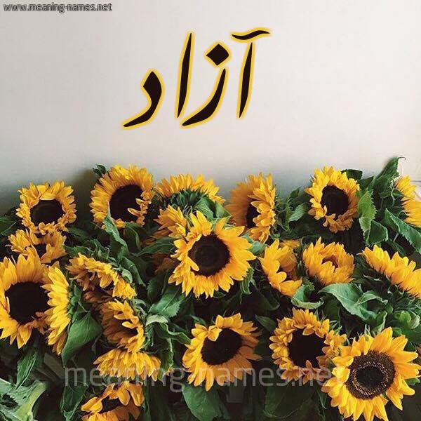 صورة اسم آزاد Azad شكل 17 صوره دوار الشمس للإسم بخط رقعة