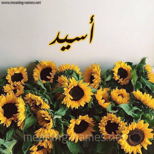صورة اسم أسيد Asid شكل 17 صوره دوار الشمس للإسم بخط رقعة