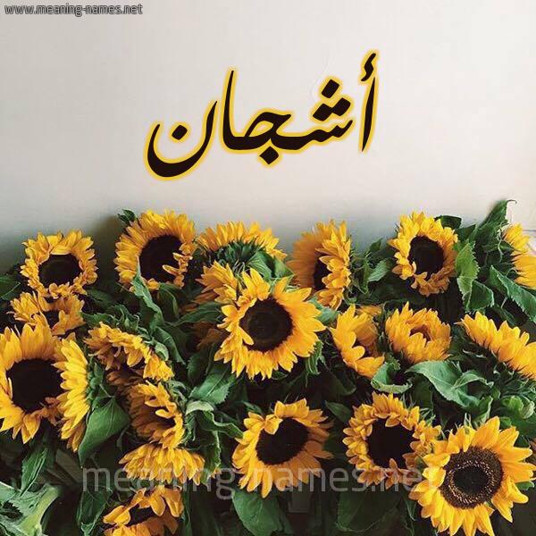 صورة اسم أشجان Ashgan شكل 17 صوره دوار الشمس للإسم بخط رقعة