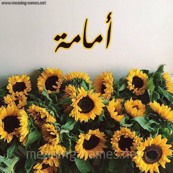 صورة اسم أمامة Omama شكل 17 صوره دوار الشمس للإسم بخط رقعة