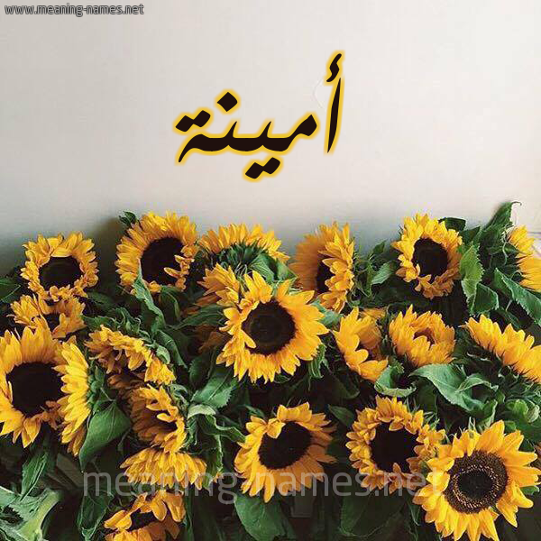 صورة اسم أمينة Amina شكل 17 صوره دوار الشمس للإسم بخط رقعة