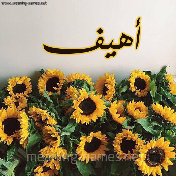 صورة اسم أهيف AHIF شكل 17 صوره دوار الشمس للإسم بخط رقعة