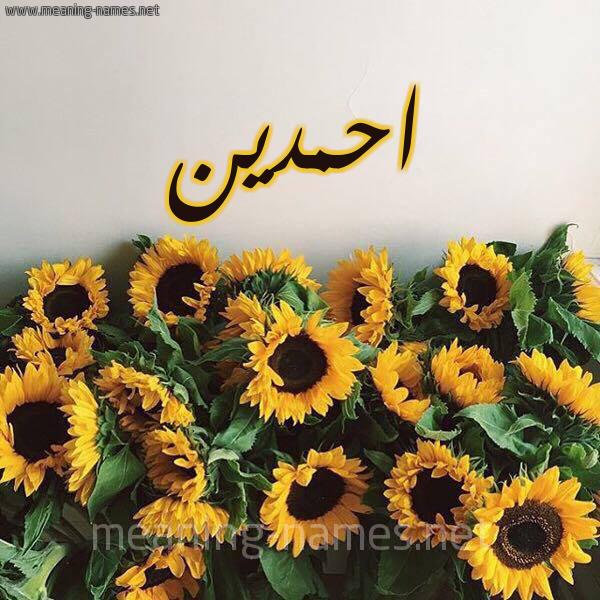 صورة اسم احمدين AHMDIN شكل 17 صوره دوار الشمس للإسم بخط رقعة