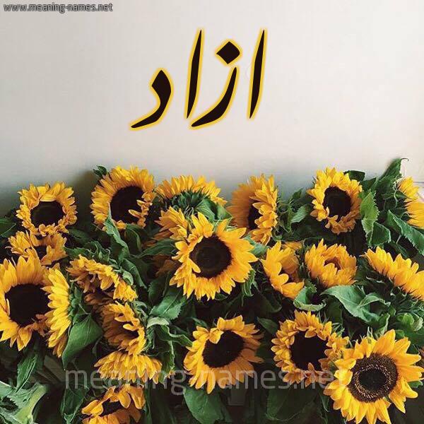 صورة اسم ازاد Azad شكل 17 صوره دوار الشمس للإسم بخط رقعة