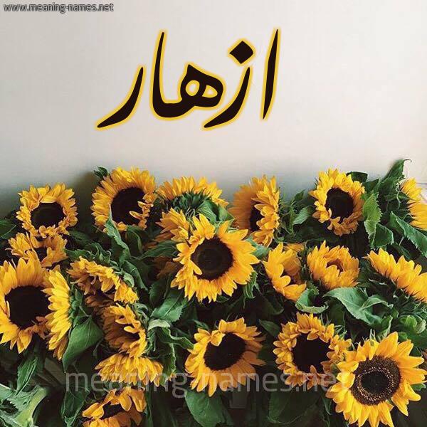 صورة اسم ازهار Azhar شكل 17 صوره دوار الشمس للإسم بخط رقعة