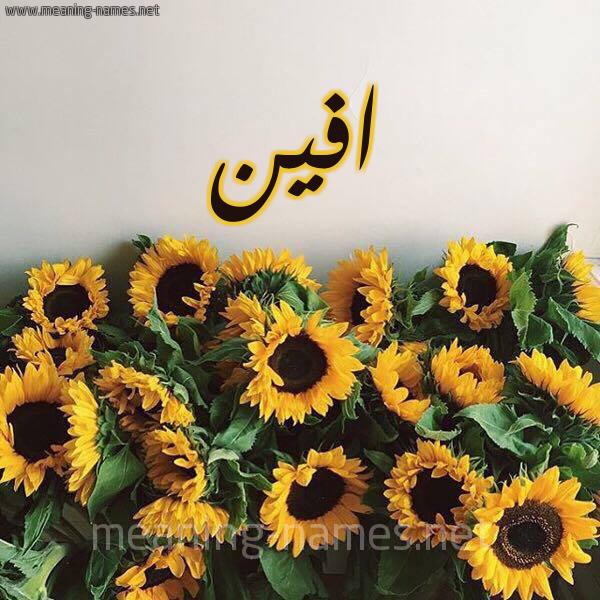 صورة اسم افين Afin شكل 17 صوره دوار الشمس للإسم بخط رقعة