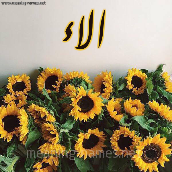 صورة اسم الاء Alaa شكل 17 صوره دوار الشمس للإسم بخط رقعة