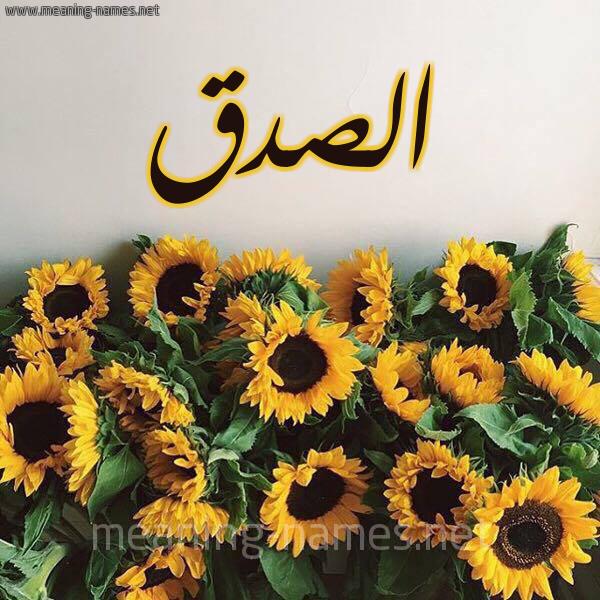 صورة اسم الصدق Al sedq شكل 17 صوره دوار الشمس للإسم بخط رقعة