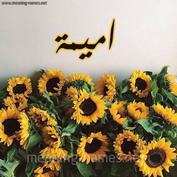 صورة اسم اميمة Omima شكل 17 صوره دوار الشمس للإسم بخط رقعة