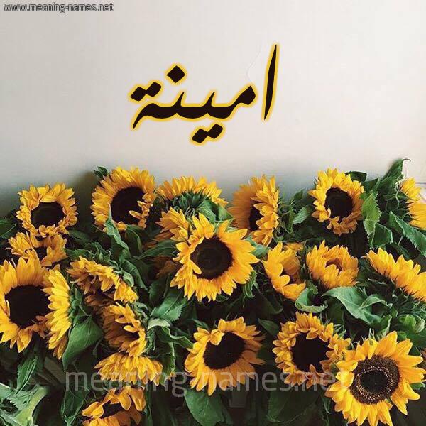 صورة اسم امينة Amina شكل 17 صوره دوار الشمس للإسم بخط رقعة