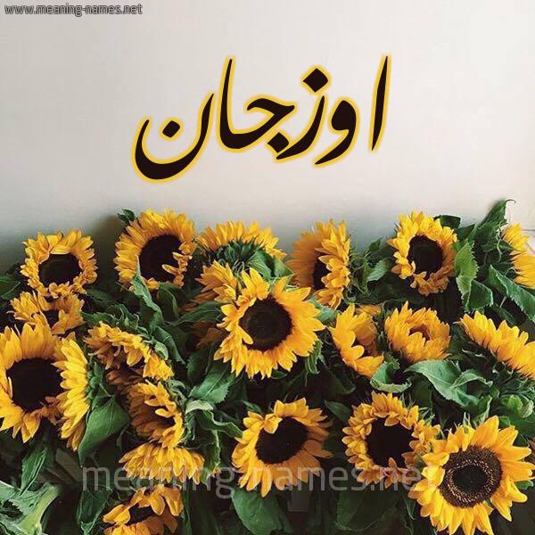 صورة اسم اوزجان Ozgan شكل 17 صوره دوار الشمس للإسم بخط رقعة