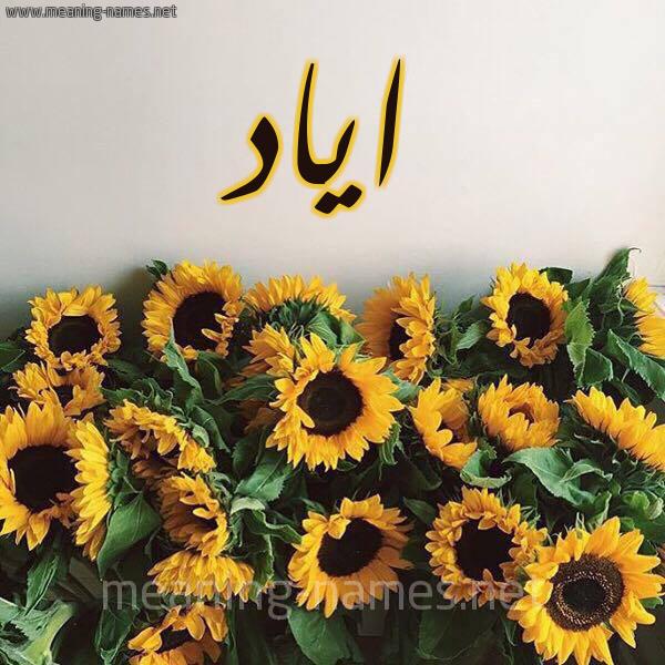 صورة اسم اياد Ayad شكل 17 صوره دوار الشمس للإسم بخط رقعة