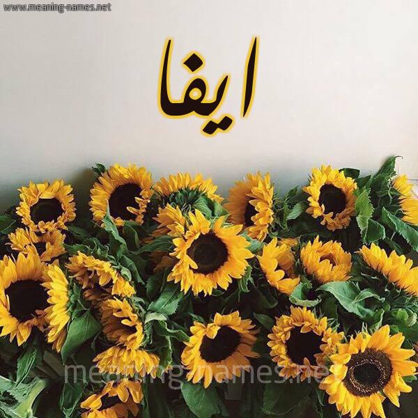 صورة اسم ايفا Aifa شكل 17 صوره دوار الشمس للإسم بخط رقعة