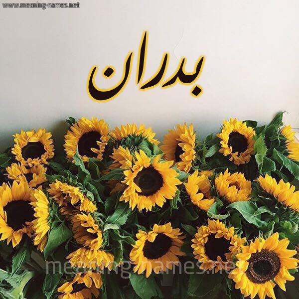 صورة اسم بدران Badran شكل 17 صوره دوار الشمس للإسم بخط رقعة