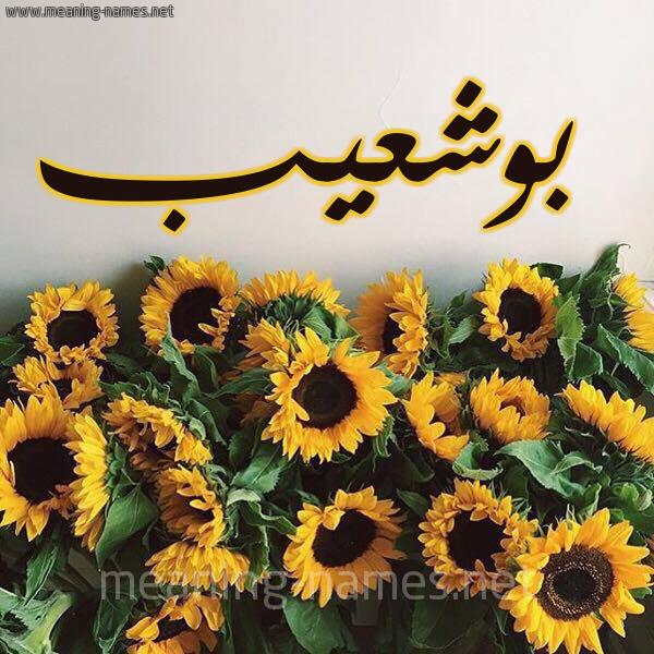 صورة اسم بوشعيب BOUCHAIB شكل 17 صوره دوار الشمس للإسم بخط رقعة