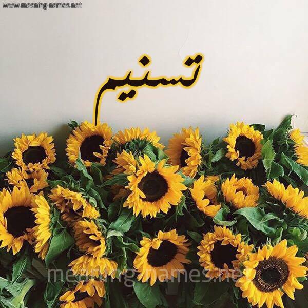 صورة اسم تسنيم Tsnym شكل 17 صوره دوار الشمس للإسم بخط رقعة