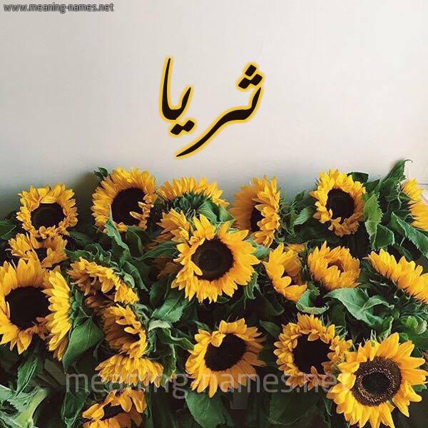 صورة اسم ثريا Thrya شكل 17 صوره دوار الشمس للإسم بخط رقعة