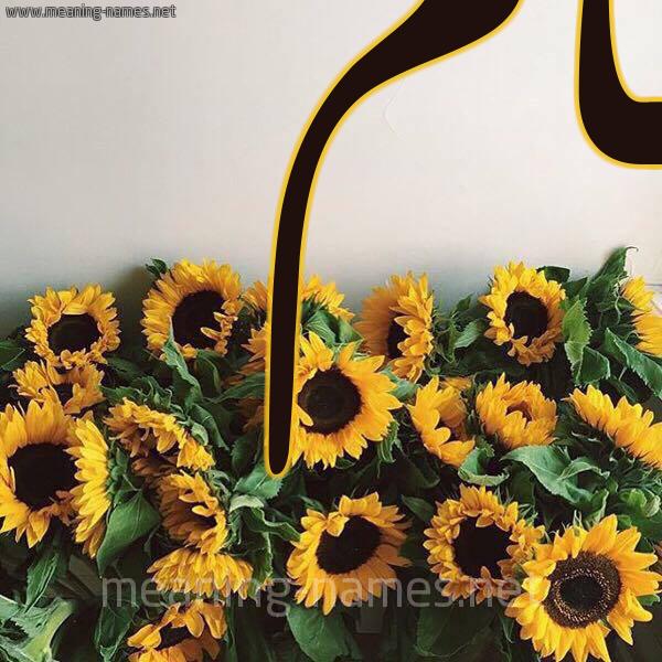 صورة اسم حام HAM شكل 17 صوره دوار الشمس للإسم بخط رقعة