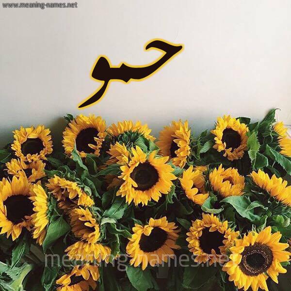 صورة اسم حمو Hammou شكل 17 صوره دوار الشمس للإسم بخط رقعة