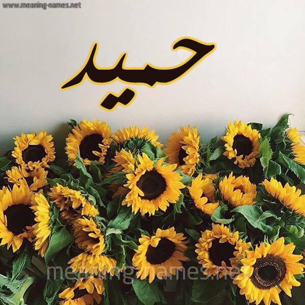 صورة اسم حميد Hmid شكل 17 صوره دوار الشمس للإسم بخط رقعة