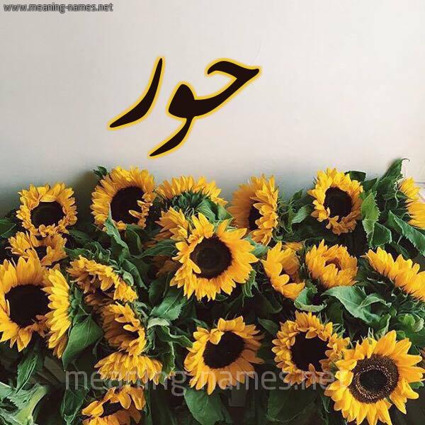 صورة اسم حور Hoor شكل 17 صوره دوار الشمس للإسم بخط رقعة