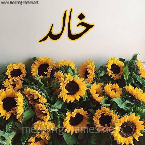 صورة اسم خالد Khaled شكل 17 صوره دوار الشمس للإسم بخط رقعة