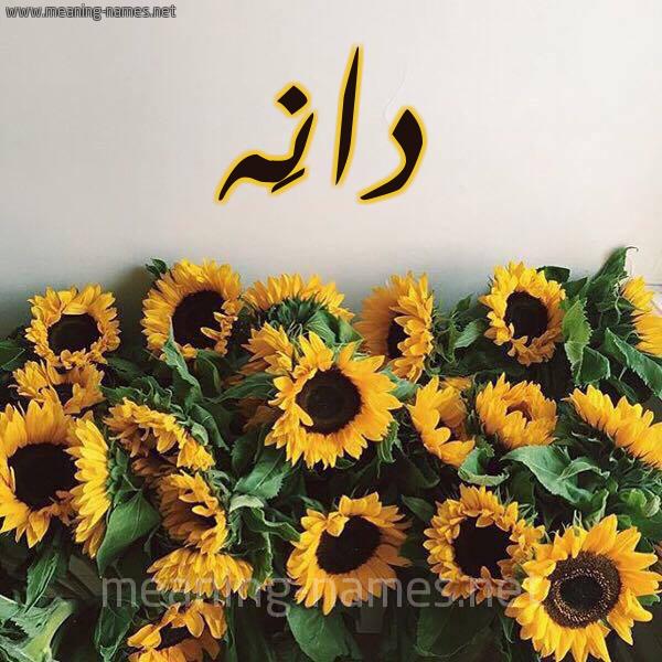 صورة اسم دانَه DANAH شكل 17 صوره دوار الشمس للإسم بخط رقعة
