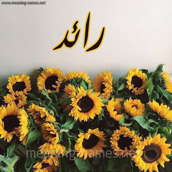 صورة اسم رائد Raed شكل 17 صوره دوار الشمس للإسم بخط رقعة
