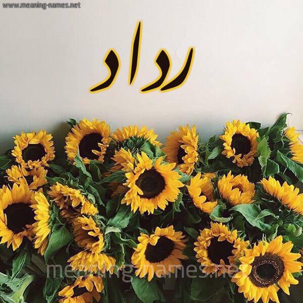 صورة اسم رداد Raddad شكل 17 صوره دوار الشمس للإسم بخط رقعة
