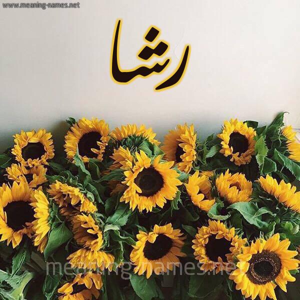 شكل 17 صوره دوار الشمس للإسم بخط رقعة صورة اسم رشا Rsha