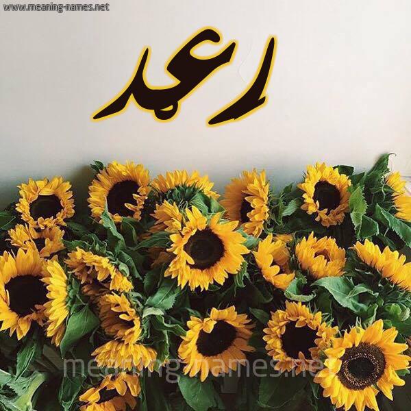 صورة اسم رَعْد RAAD شكل 17 صوره دوار الشمس للإسم بخط رقعة