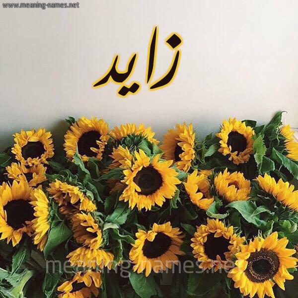 صورة اسم زايد Zaid شكل 17 صوره دوار الشمس للإسم بخط رقعة