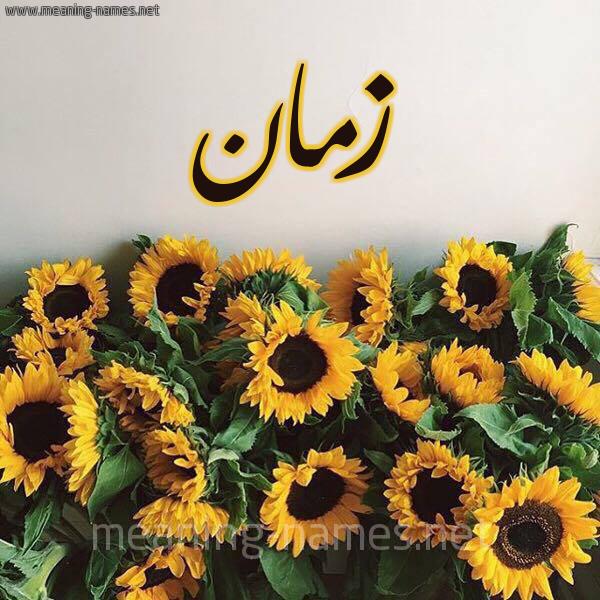 صورة اسم زمان Zman شكل 17 صوره دوار الشمس للإسم بخط رقعة