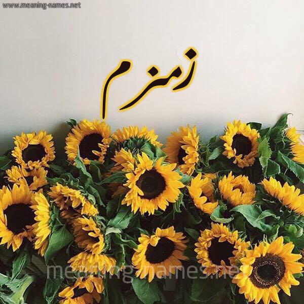 صورة اسم زمزم Zmzm شكل 17 صوره دوار الشمس للإسم بخط رقعة